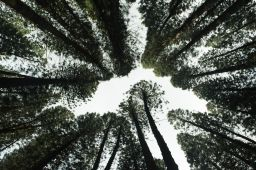 European Commission Releases a Number of 'Green Taxation' Measures